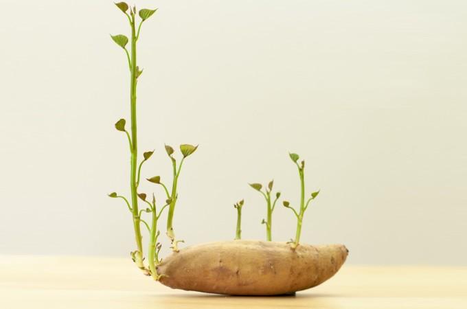 sproutdef2